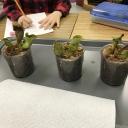 Plants project